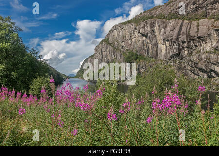 Beautiful Norwegian landscape with mountains, lake, blue sky and fireweed on the foreground. - Stock Image