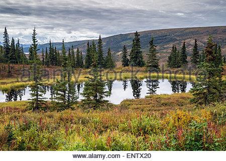 Small pond at Camp Denali (North Face Lodge) in Denali national park Alaska - Stock Image