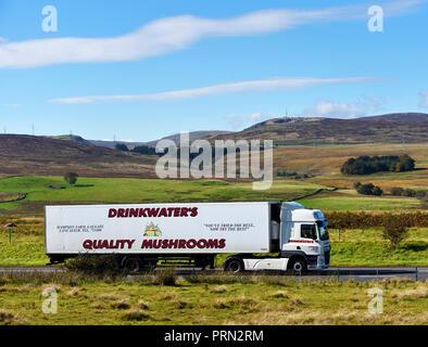 Drinkwater's Quality Mushrooms HGV. M6 Northbound carriageway, Shap, Cumbria, England, United Kingdom, Europe. - Stock Image