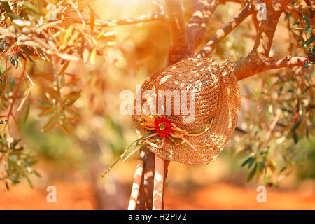 Womens straw hat on the olive tree near gardening tools in bright sunset light, autumn harvest season - Stock Image