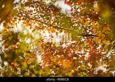 Trees showing their fall color, Lancaster County, Pennsylvania, USA - Stock Image