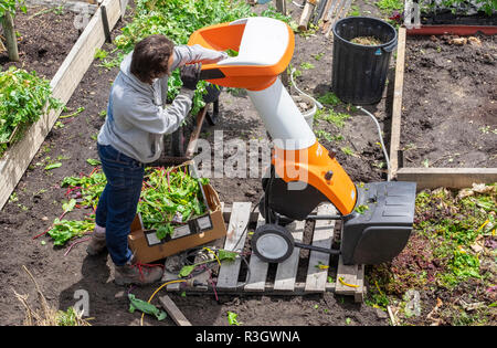 Shredding garden waste for a composting bed using a mechanical mulcher - Stock Image