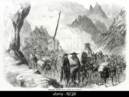 Mules carrying Spanish wines across the Pyrenees. - Stock Image