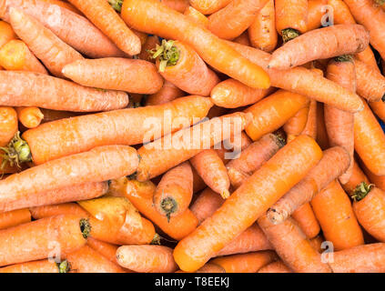 Fresh uncleaned carrots - Stock Image