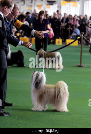 New York, United States. 11th Feb, 2019. Westminster Dog Show - New York City, 11 February, 2019: A Tibetan Terrier, GCHB CH Dreammaker Salishan Starry Starry Night, during the Best of Breed Competition at the 143rd Annual Westminster Dog Show in New York City. Credit: Adam Stoltman/Alamy Live News - Stock Image