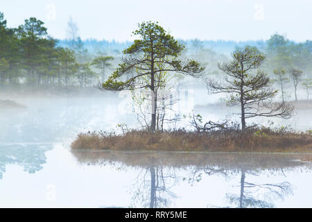 Scenic view of a fogy swamp in a morning - Stock Image