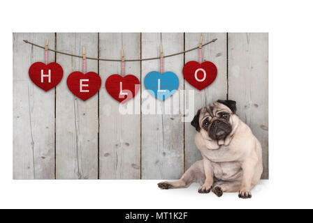 Cute pug puppy dog sitting down next to wooden fence of reclaimed barn wood with red and blue hearts with text hello, isolated on white background - Stock Image