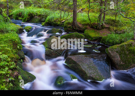 Wild little stream in summer forest - Stock Image