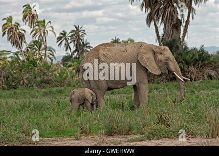 Mother elephant and baby. Kenya, Africa. - Stock Image