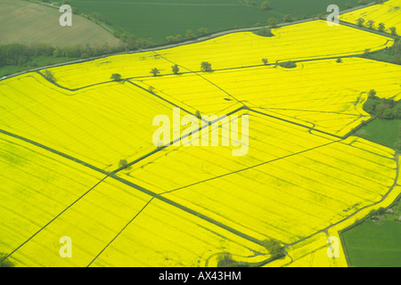 Aerial view of sevaral fields with a crop of oilseed rape growing in them, also known as rape or rapeseed - Stock Image