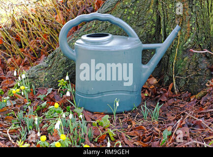 A watering can at the base of a tree with Snowdrops and Winter Aconites in an English country churchyard at Shelton, Norfolk, England, UK, Europe. - Stock Image