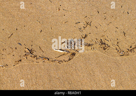 Plastic debris in the ocean water edge washed up on a sand beach Agadir, Morocco - Stock Image
