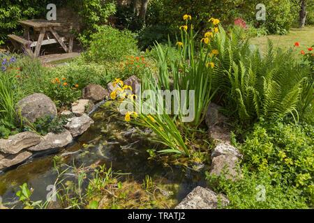 Garden pond with damp loving plants & shrubs, picnic table - Stock Image