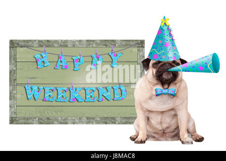 cute pug puppy dog with blue party hat and horn and green wooden sign with text happy weekend, isolated on white - Stock Image