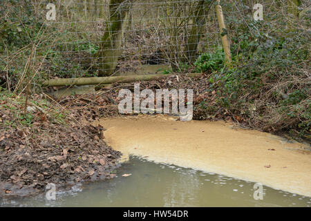 Stagnant water caused by branches blocking flow of stream in the north Oxfordshire village of Hook Norton - Stock Image