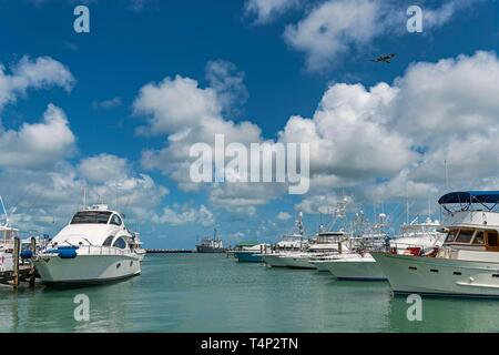 Yachts in the Marina Key West, Florida Keys, Florida, USA - Stock Image