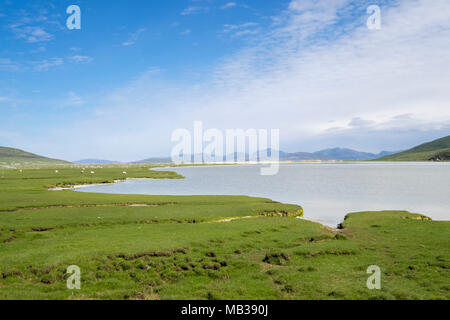 Coastal salt marsh by sea loch with sheep grazing in summer. Northton, Isle of Harris, Outer Hebrides, Western Isles, Scotland, UK, Britain - Stock Image