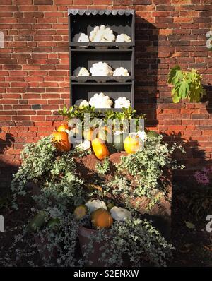 Autumn Squash Display - Stock Image