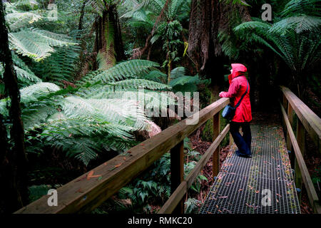 Woman in red coat admiring tree ferns (Dicksonia antarctica), Notley Fern Gorge State Reserve, near Launceston, Tasmania, Australia. No MR or PR - Stock Image