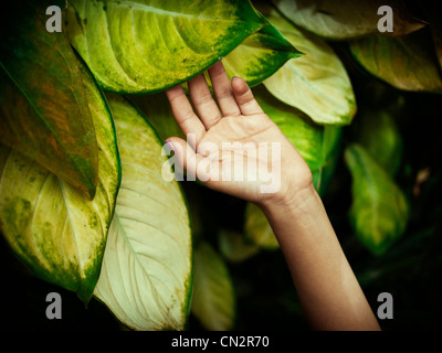 Girl's hand on leaf in tropical house. - Stock Image