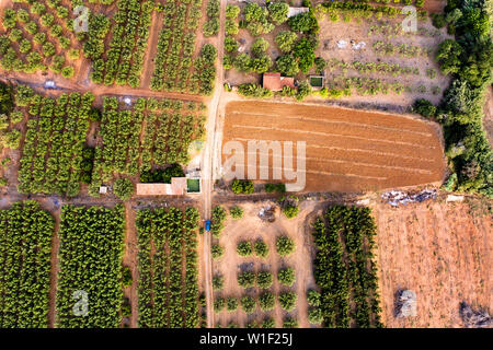 top view of different crop fields of a farm plantation, green field background agricultural industry aerial view - Stock Image