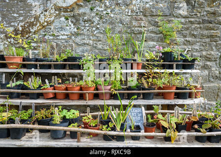 Various plants and herbs for sale in late summer using traditional medieval materials for shelving. - Stock Image