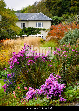 Compressed perspective view over the Autumn hues of the Summer garden at The Garden House, Buckland Monachorum, Devon, UK - Stock Image