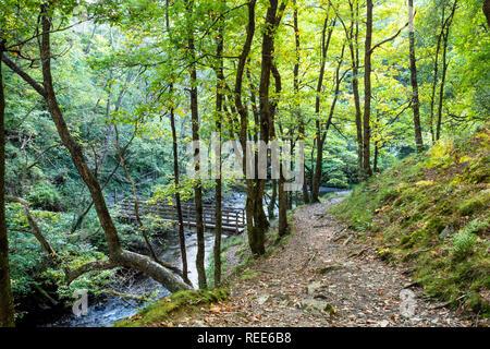Woodland walk River Neath Pontneddfechan Glynneath Vale of Neath Powys Wales - Stock Image