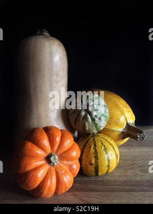 A selection of rustic winter squash vegetables including pumpkins, munchkins, butternut squash and gourds in a still life image - Stock Image
