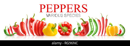 Isolated peppers. Various species of fresh peppers in a row isolated on white background with clipping path - Stock Image