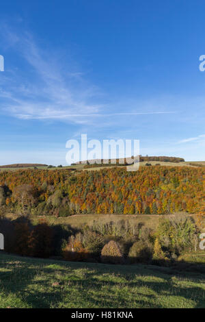 View in Autumn over Arundel park and the south downs, West Sussex - Stock Image