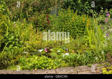 Garden pond in residential back garden, England - Stock Image
