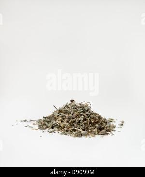 Small heap of catnip (Nepeta Cataria) on white background - Stock Image