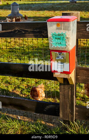 Chicken feed dispenser, Hoover's Farm Market, Amish Country, Lancaster County, Pennsylvania, USA - Stock Image