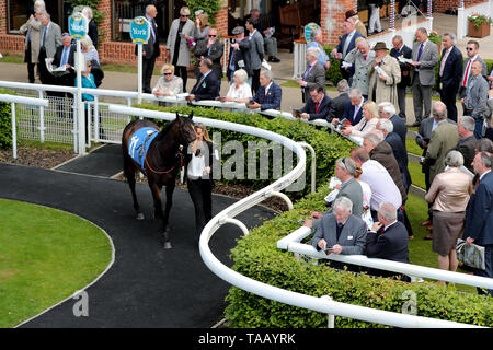 A horse in the parade ring - Stock Image