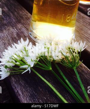 Hot sunny days picking wild garlic. - Stock Image