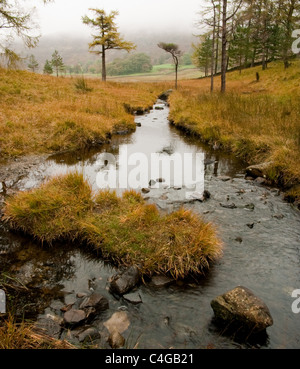 Stream and trees on a misty Autumn day at Blea Tarn in the English Lake District - Stock Image