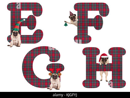 cute Christmas pug puppy dog alphabet letters E F G H, isolated on white background - Stock Image