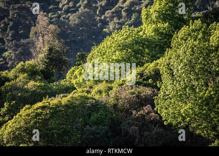 New Zealand temperate rainforest, Nelson, New Zealand - Stock Image
