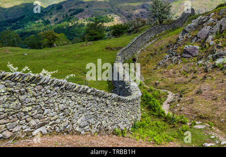 A winding drystone wall on Hammerscar Plantation above the Langdale and Rothay Vallies in the Lake District, Cumbria - Stock Image