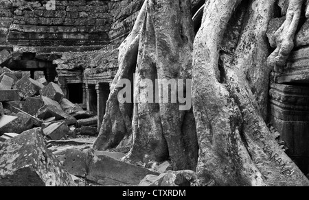 Silk-cotton tree roots growing over the inner enclosure Western gallery, Ta Prohm Temple, Angkor, Cambodia - Stock Image