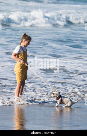 A Jack Russell Terrier very reluctant to paddle in the sea at Fistral Beach in Newquay in Cornwall. - Stock Image