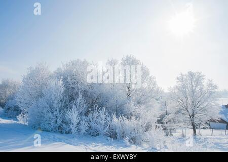 Bushes and trees in winter, Upper Palatinate, Bavaria, Germany, Europe - Stock Image