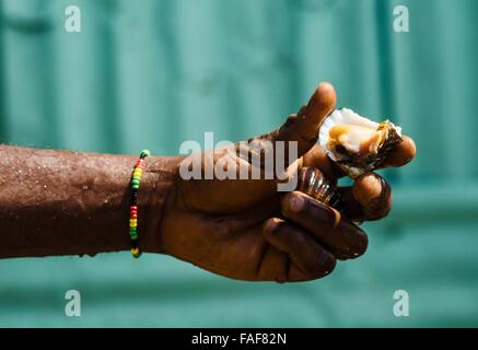 A man holds up a cockle before cooking it in Freetown, Sierra Leone. - Stock Image