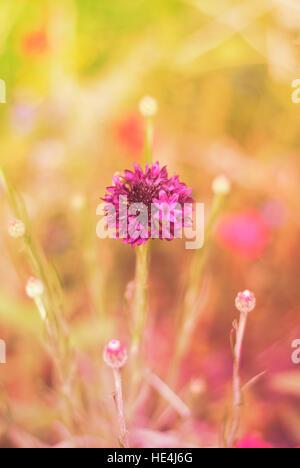 Close up of purple wildflower - Stock Image