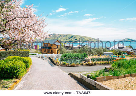Cherry blossoms and seaside village at Shodoshima Olive park in Shikoku, Japan - Stock Image