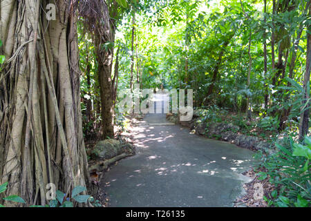 Foot walk path with trees forest nature background. - Stock Image
