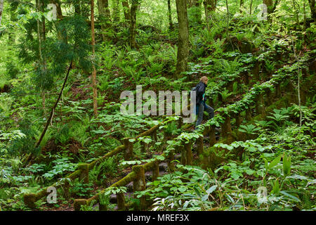 Female backpacker climbing wooden stairway in Oirase Keiryu Stream in Towada National Park, Japan. The stream walk is 14km long and features a series  - Stock Image