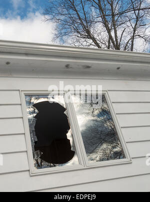 window broken by bird in flight - Stock Image