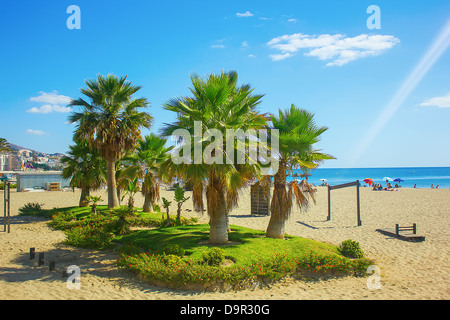 Palm trees on a beach in Fuengirola, Spain - Stock Image